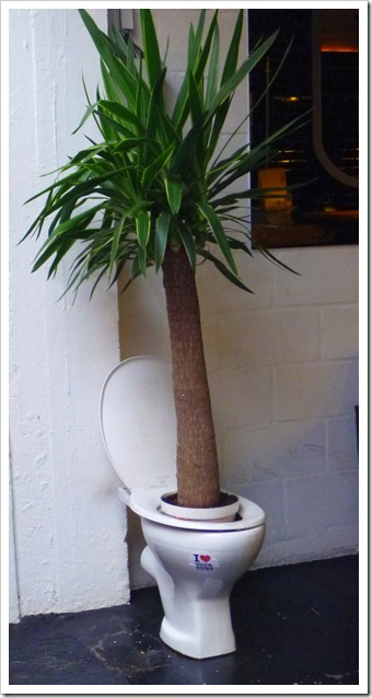 check out this toilet-potted palm!