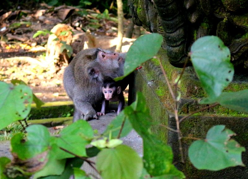 Sacred Monkey Forest Sanctuary, Ubud, Bali, Indonesia