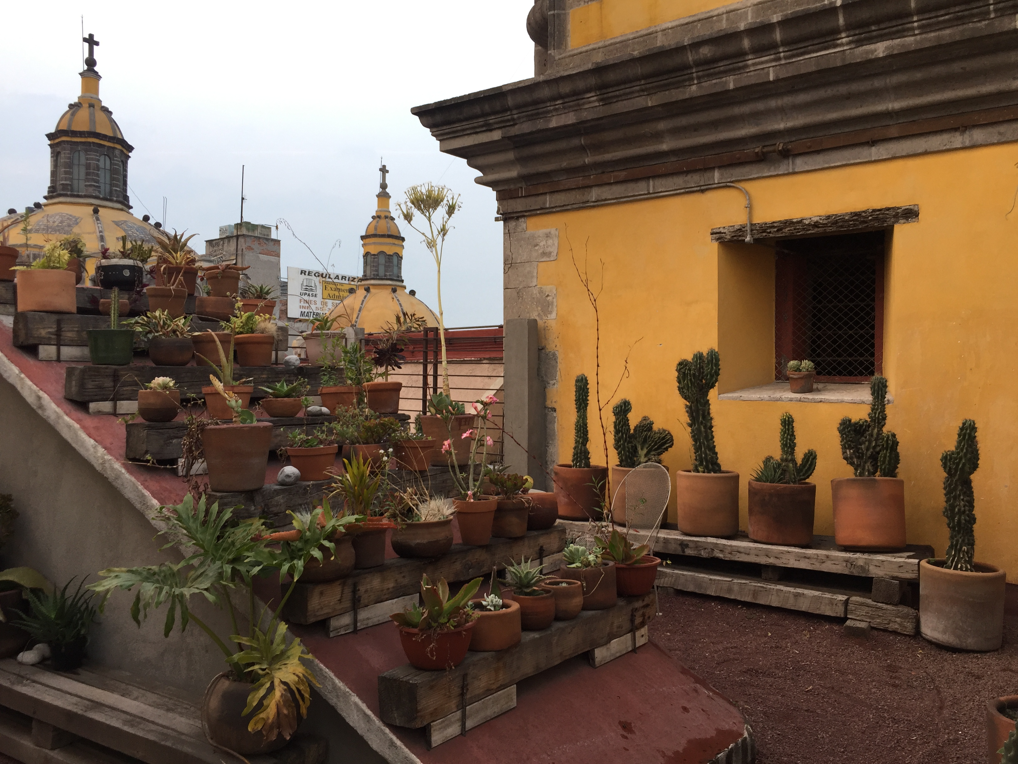 Chaya Bed and Breakfast Reviewed Mexico CIty Hotel with Rooftop Views